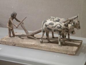 egypt-ox